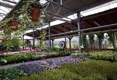 Piante da interni e esterni « Giardini Galbiati