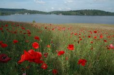 lac-de-vassiviere0147 #YesYouAre #Limousin