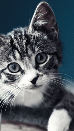 And you can use other freeaddon extensions along with this cute cats kittens new tab. Cat Phone Wallpaper, Cute Cat Wallpaper, Animal Wallpaper, Hd Wallpaper, Black Wallpaper, Beautiful Cat Images, Most Beautiful Cat Breeds, Wallpapers Android, Mobiles