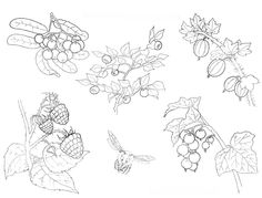 coloring page with fruit