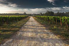 Camino Rural, Camino De Grava, Tuscany, Manera, Camino
