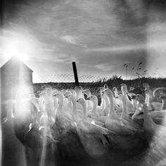 martin bogren Double Exposure Photo, Black Art, Black And White, Experimental Photography, Nature, Inspiration, Image, Photographers, Pretty