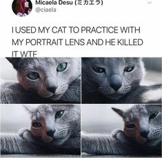 Good Pics all cat breeds Thoughts Cats and kittens with massive head may end up being one of the most cute critters inside world. Animal Jokes, Funny Animal Memes, Funny Animal Pictures, Cat Memes, Memes Humour, Cats Humor, Funny Humor, Funny Images, Cute Little Animals