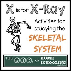 Activites for Studying the Skeletal System