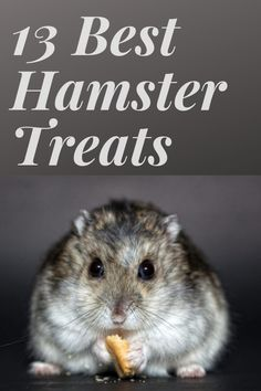 Read this guide to know all about hamster nutrition requirements and the best hamster food and treats available in the market. Dwarf Hamster Food, Dwarf Hamster Cages, Cool Hamster Cages, Robo Dwarf Hamsters, Hamsters As Pets, Funny Hamsters, Rodents, Hamster Treats, Diy Hamster Toys