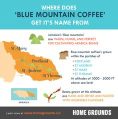 Jamaican Blue Mountain Coffee – Where To Buy It, And How To Avoid Being Ripped Off - Home Grounds Coffee Coffee, Coffee Beans, Jamaican Coffee, Java Tea, Blue Mountain Coffee, Coffee Review, St Thomas, Colonial, How To Find Out