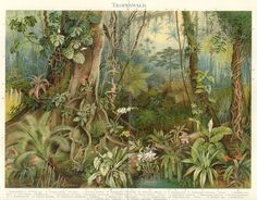 A tropical jungle scene featuring exotic flora and fauna. The design is based on a vintage drawing of tropical forest plants, created for a. Jungle Illustration, Antique Illustration, Plant Illustration, Tropical Forest, Tropical Art, Tropical Plants, Jungle Scene, Forest Plants, Vintage Drawing