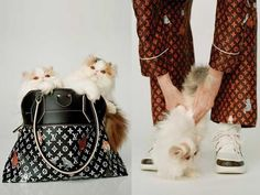 148f7a5f6fbc Such Adorable Kittens Who Model Louis Vuitton s New Catogram Collection  Featuring Grace Coddington.  adcampaign