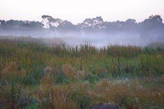 Cool mists enhance colours of grasses Grasses, Mists, Colours, Explore, Mountains, Cool Stuff, Country, Nature, Photos
