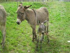 Timo appena nato!