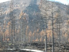 Driving Through the Burn   #forestfire