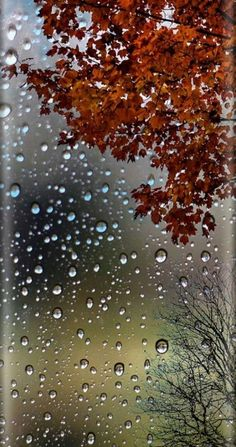 Autumn leaves and raindrops wallpaper iphone photography, photography tips, autumn rain, fall winter Wallpapers Android, Ombre Wallpapers, Rain Wallpapers, Cute Wallpapers, Wallpaper Backgrounds, Fall Wallpaper, Colorful Wallpaper, Flower Wallpaper, Autumn Rain