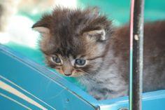 Ons kitten