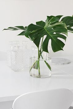 Decorar con plantas_monstera 2
