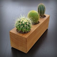 When you have identified your cactus type, you have to create the most suitable atmosphere for it. An assortment of cactus house plants appear good together. There are several different kinds of cactus combo bonsai plants. Wooden Planters, Planter Pots, Planter Ideas, Long Planter, Indoor Garden, Indoor Plants, Indoor Outdoor, Terrarium Cactus, Cactus Pot