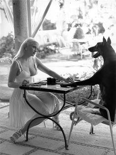 chess dog
