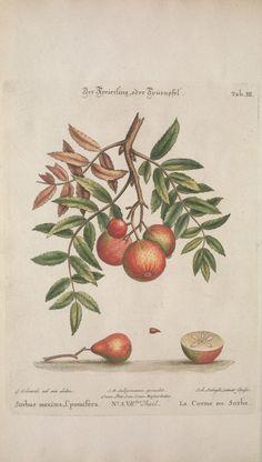 (1773-1774) - Recueil de divers oiseaux étrangers et peu communs - Biodiversity Heritage Library