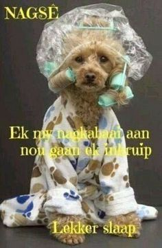 Funny Animal Pictures, Funny Animals, Cute Animals, Animal Pics, Goeie Nag, Goeie More, Afrikaans Quotes, Good Night Sweet Dreams, Night Wishes