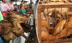 THE YULIN Dog Meat Festival is taking place in China today despite strong condemnation from around the world. But what is the Yulin Dog Meat Festival and why has it not been banned?
