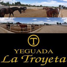 #yeguadalatroyeta #ancce #caballos #purarazaespañola #prehorse