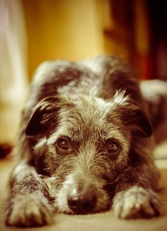 This is exactly the dog that I'd name Strummer. And we will do the best things like run around in the rain together.