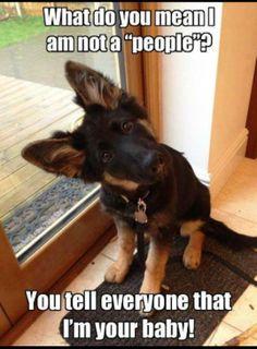 German Shepherd lol