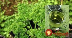 Petržlenový čaj má úžasnú moc: pomôže so zápalom a je to najsilnejší detox. Parsley, Detox, Omega 3, Herbs, Tableware, Dinnerware, Tablewares, Herb, Dishes
