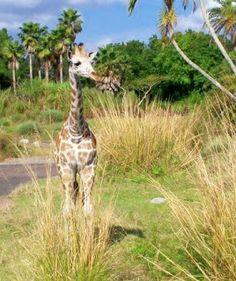 Kilimanjaro Safari ride review