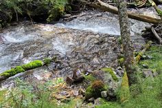 #hiking Kimpton Creek in Kootenay National Park, BC, Canada
