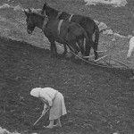οργωμα Goats, Horses, Woman, Animals, Animales, Animaux, Women, Animal, Animais