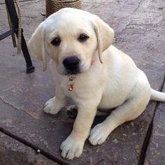 Awwww!!! What a cute puppy!!!! Puppy love!!!!