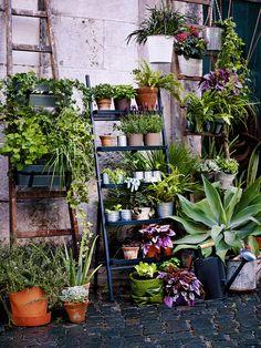 Viele bepflanzte Blumentöpfe auf Blumenleitern ermöglichen trotz wenig Platz eine grüne Oase