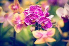 Orchid Fine Art Photography, Nature Photography, Wall Art https://www.etsy.com/listing/176163777