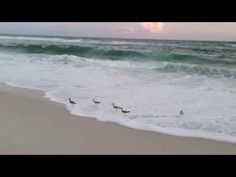 Beach and Birds Video Bird Gif, Waves, Birds, Beach, Outdoor, Outdoors, Bird, Ocean Waves, Outdoor Games
