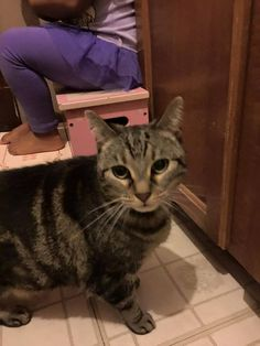 Plainfield Animal Control tabby 11/5    This cat was found in Central Village near the Central Hotel. If it is yours, please call and I will get you in contact with the finders https://www.facebook.com/169841113077581/photos/a.169841666410859.41646.169841113077581/953853814676303/?type=3&theater