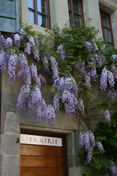 Two of my favorite things...a library AND wisteria.