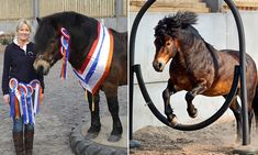 Exmoor pony branded and left for dead trained into a world champion #DailyMail