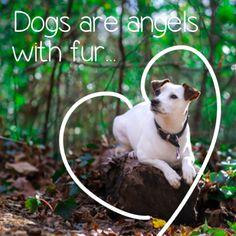 Isis is the Daily Dogly via Dogly app http://dogly.com/p/24009 @beingdogly #beingdogly