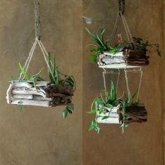 Reintroducing our popular driftwood hanging planters back to our line! www.driftingconcepts.com