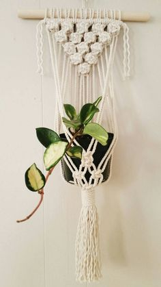 "Wall Plant Hanger ""Macadamia Nut"""