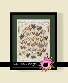 CHICKEN VINTAGE POSTER - Assorted Chickens, Roosters and Hens - Downloadable Art Print of Roosters and Chickens - Instant Printable Poster