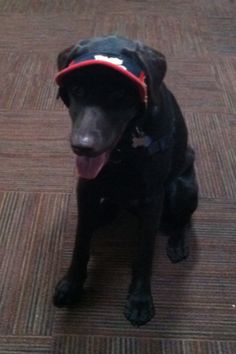 Reggie the Wonder Dog. He loves his Phil's visor.
