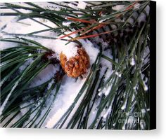 Pinecone Canvas Print by Camelia C.  All canvas prints are professionally printed, assembled, and shipped within 3 - 4 business days and delivered ready-to-hang on your wall. Choose from multiple print sizes, border colors, and canvas materials.