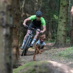 If only @ruffwear made a Swamp Cooler™ for humans too! ☀️ Summers here! @edenpetfoods  #traildog #mtb #cycling #mountainbiking #vizsla #vizslagram #vizslasofinstagram #hungarianvizsla #dog #dogsofinstagram #dogstagram