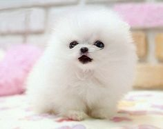 Cute Baby Puppies | … | Cutearoo | Puppies, Kittens, Baby Animals, Cute Pictures