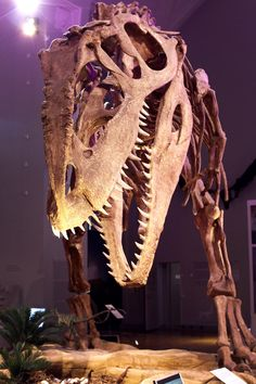 Giganotosaurus carolinii by barometri.deviantart.com| In #China? Try www.importedFun.com for award winning #kid's #science |