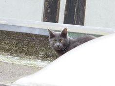 Maya Ze #Cat (mon chat)
