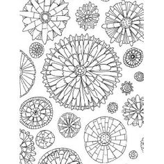 adult coloring book botanicals