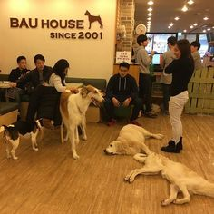 Pin for Later: 15 Ridiculously Awesome Animal Cafes That You Can Visit Bau House Dog Cafe, Seoul, South Korea Having a ruff day? Cheer yourself up with dogs of all shapes and sizes, which abound at Bau House in Seoul.