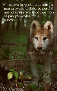 Dolore Beautiful Wolves, Beautiful Dogs, Animals Beautiful, Animals And Pets, Baby Animals, Cute Animals, Malamute, Husky, Wolf Pup